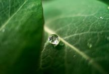 Macro photography / Nice macro photography from Portfoliobox user