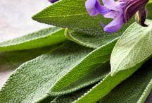 aromas y aceites
