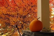 autumn love / by Sarah Therien