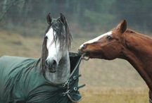 Horses funny moments :D / :D