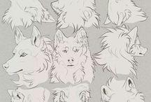 studie vlci