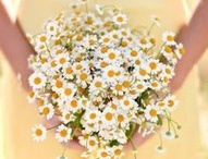 Camomile wedding
