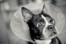 bucketheads / oh no - not the cone of shame...