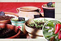 garden article