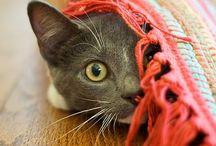 Amores Perros y Gatos !!!!♡♥♡ / Una de mis debilidades... / by Ana Giuliani Sanucci
