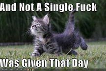 Crazy Cat Lady / Cats = Internet = Life