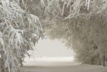 Paesaggi / Snow