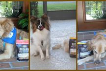 Castor & Pollux Pet Organic Food and Treats / Home of the ORGANIX brand of organic pet food, Natural Ultramix all-natural pet foods and Good Buddy Treats.