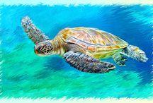 Wasser-/ Meeresschildkröten