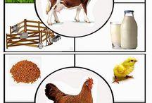 MŠ zvieratá