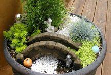Zen/fairy garden