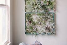 DIY air plant displays