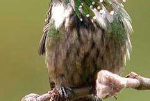 Menudo pájaro!