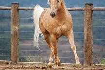 paarden en pony,s