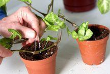 Houseplants / Care