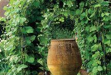 Veggie garden / by Brandi Cox