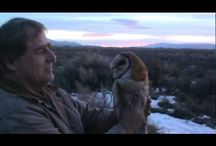 Owls /  Owls we have cared for