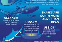 Shark Conservation / Getting the message out across the world that sharks are not the man and flesh eating beasts that the media portray them to be and that they are a gentle, intelligent animal that need to be conserved as they are at risk of extinction NOW