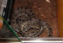 Lovely snakes