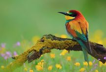 cute birds / birds