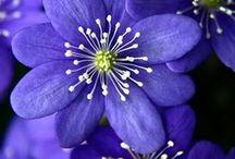 kukatkuvat
