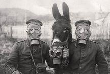 CHEVAUX TROUPIERS / Les chevaux du front WW1 Horses Grande Guerre