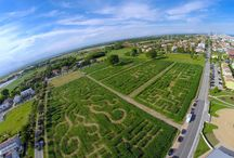 A Temporary Corn Maze in Venice / http://www.landezine.com/index.php/2016/11/a-temporary-corn-maze-in-venice/