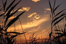 Sun going to sleep / by Richard Morse
