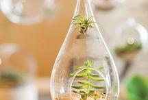 Plantas y huertos - Plants and Vegetable Garden