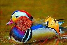 most beautiful coloured animals