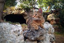 Gli #archeomici di #lamadantico / Tutte le foto degli #archeocats di #lamadantico