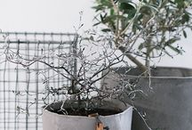 potter til planter
