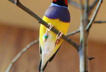 мои птицы