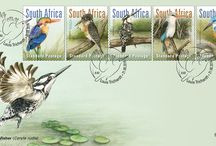 South African Kingfishers