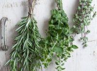 Vegetables herbs