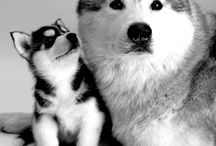 ANIMAL KINGDOM / Creatures of the World