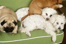 Dogs - Anjing / Poto anjing lucu
