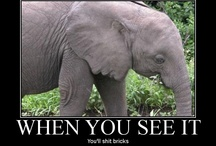 can YOU see it???