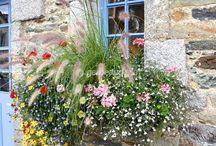 Jardinières de fleurs