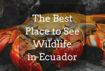 Ecuador Travel Inspiration / Get ideas and inspiration for your trips to Ecuador in South America with Veloso Tours, the Latin America specialists