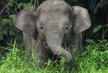 Voyage chez les Éléphants / ...