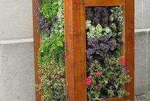 vertical gardens / by Nereida Vonsensburg