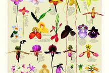 flowers / by Kirsty Skilbeck