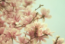 lovely flora / by AdeFitri Goggi