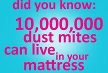 ecozone fun facts