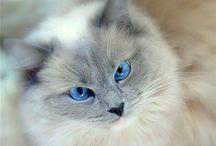 Kissoja