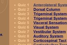 Sensory neuro / Neuroanatomy