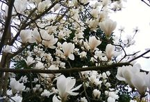 One of my fav trees