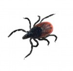 Identifying Insects / Found a bug in your home? Does it look like any of these?