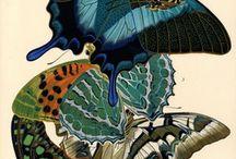 Fauna / by Debra
